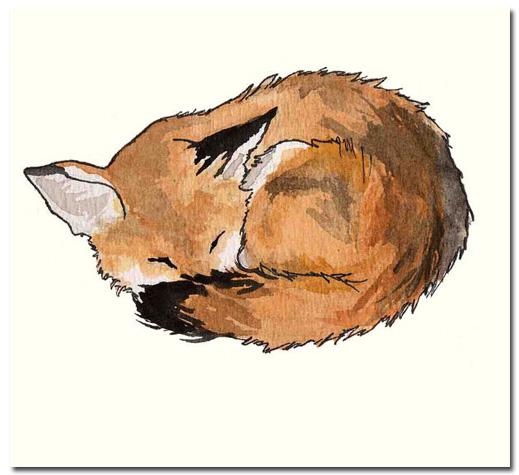 Fox tumblr animal